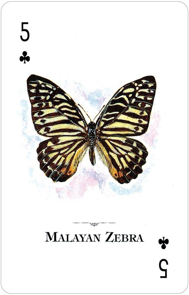 Butterflies of the Natural World Playing Cards