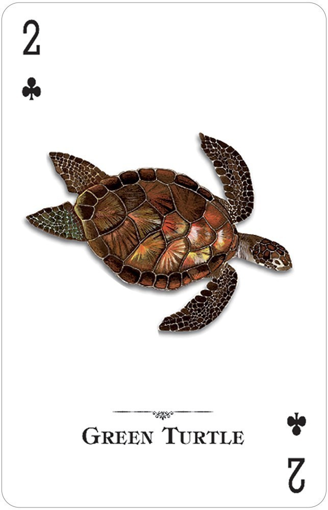 Reptiles & Amphibians of the Natural World Playing Cards